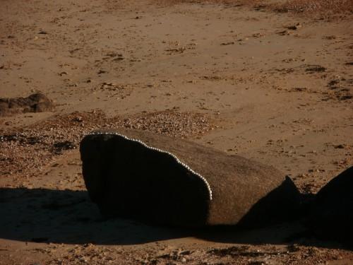 Patelgé, land art, rake art, beach art, dessin sable, art, perros-guirec, trestraou, bretagne, plage, art du coquillage, installation artistique, tabernik équilibrium, berniques, Erik Mongrain
