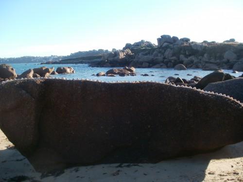 Patelgé, land art, rake art, beach art, dessin sable, art, perros-guirec, trestraou, bretagne, plage, coquillages, installation artistique, iguanodon
