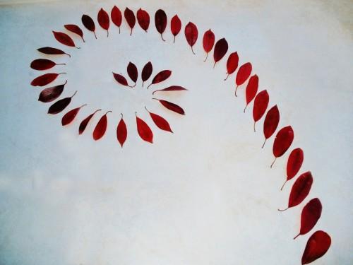 spirale,patelge,landart,fleur art, feuille