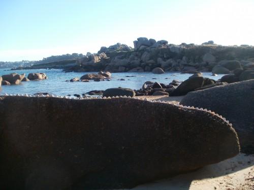 Patelgé, land art, rake art, beach art, dessin sable, art, perros-guirec, trestraou, bretagne, plage, coquillages, installation artistique, iguanodon du poète